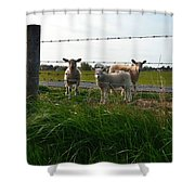 Lambs Behind The Wire Shower Curtain