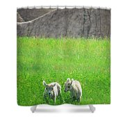 Lambs In A Sea Of Green Shower Curtain