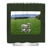 Lambs In Pasture Shower Curtain