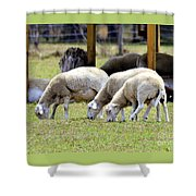 Lambswool Shower Curtain