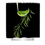 Lamed - Second Hebrew Letter In Shalom Shower Curtain