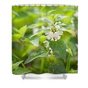 Lamium Album White Flowers Macro Shower Curtain