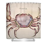 Land Crab Shower Curtain