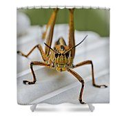 Land Lubber Shower Curtain