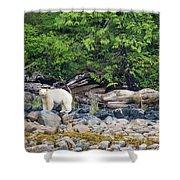Land Of The Spirit Bear Shower Curtain