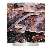 Land Planarium Shower Curtain