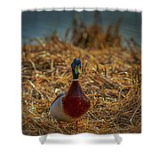 Landed Duck #g2 Shower Curtain