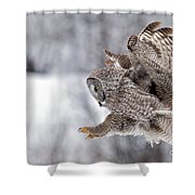 Landing Great Grey Owl Shower Curtain