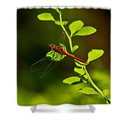 Landing Pad Shower Curtain