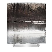 Landing Trumpeter Swans Shower Curtain