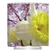 Landscape Daffodils Flowers Art Pink Tree Blossoms Spring Baslee Shower Curtain