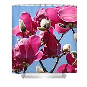 Landscape Pink Magnolia Flowers 46 Blue Sky Magnolia Tree Shower Curtain