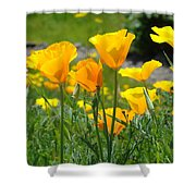 Landscape Poppy Flowers 5 Orange Poppies Hillside Meadow Art Shower Curtain