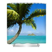 Lanikai Palm Shower Curtain