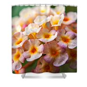 Lantana-1 Shower Curtain