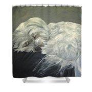 Lap Dog Shower Curtain