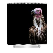Lappet-faced Vulture - Africa - African Vulture - Nubian Vulture Shower Curtain