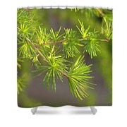 Larch Branch And Foliage Shower Curtain