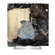 Large Blue Butterfly Shower Curtain