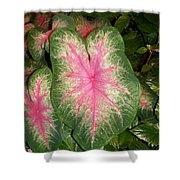 Large Coleus Plant Shower Curtain