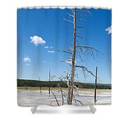 Large Dead Standing Tree In Hot Springs  Shower Curtain