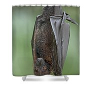 Large Flying Fox Pteropus Vampyrus Shower Curtain