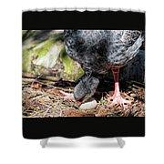 Large Gray South American Nesting Bird Rotating Egg Shower Curtain