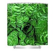 Large Green Display Of Concentric Leaves Shower Curtain