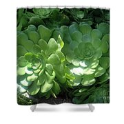 Large Green Succulent Plants Shower Curtain