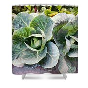 Large Leaves Of A Cabbage Plant Shower Curtain