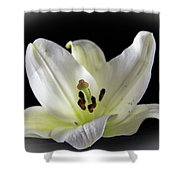 Large Lily-1 Shower Curtain