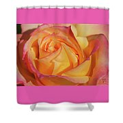 Large Peace Rose Center 006 Shower Curtain