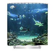 Large Sawfish And Other Fishes Swimming In A Large Aquarium Shower Curtain