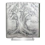 Large Shady Tree Shower Curtain