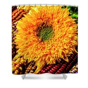 Large Sunflower On Indian Corn Shower Curtain