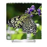 Large Tree Nymph Polinating Dainty Purple Flowers Shower Curtain