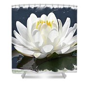 Large Water Lily With White Border Shower Curtain