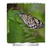 Large White Tree Nymph Butterfly On Green Foliage Shower Curtain