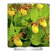 Large Yellow Lady's Slipper  Shower Curtain