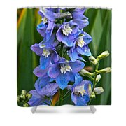 Larkspur And Lady Friend Shower Curtain