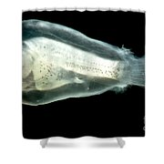 Larval Anglerfish Shower Curtain