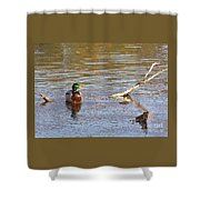 Last Mallard Of Autumn         October       Indiana    Shower Curtain