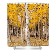 Last Of The Aspen Leaves Shower Curtain