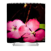Last Of The Pink Dianthus Flowers Shower Curtain