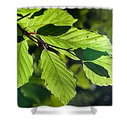 Last Of The Summer Leaves Shower Curtain