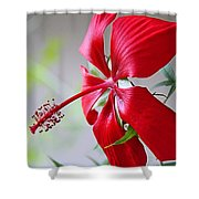 Last Rose Of Summer Shower Curtain
