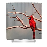 Last Snow Of Winter, Cardinal Shower Curtain