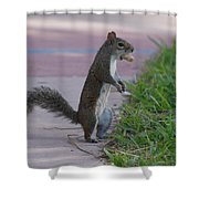 Last Squirrel Standing Shower Curtain
