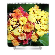 Latana And Friend Shower Curtain