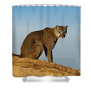 Late Afternoon Foray Shower Curtain